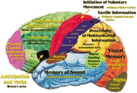 4_brain-map.jpg