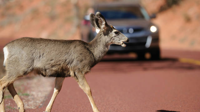 deer-crossing-edit.jpg