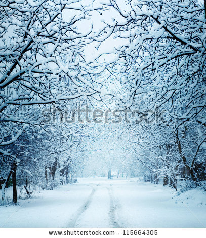 stock-photo-winter-landscape-115664305.jpg